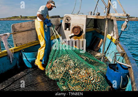The days catch being readied for storage on the sea bed. - Stock Image