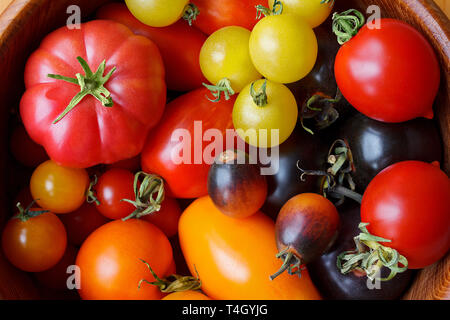 A colorful variety of old tomato cultivars close-up, biological diversity concept - Stock Image