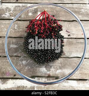 Picked Elderberries in a clear bowl. - Stock Image
