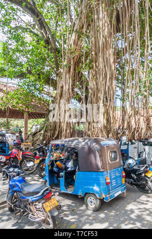 Galle, Sri Lanka - March 14th 2011: Tuk tuk driver resting under a large tree. Tuk tuks are a cheap way of getting around the city. - Stock Image