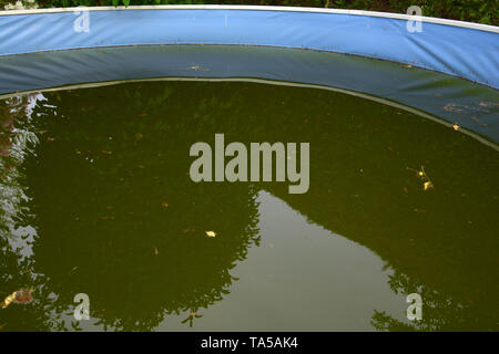unkempt frame swimming pool with green colored water due to algae and dirt, trees are reflected in the green acidified water of a steel pool - Stock Image