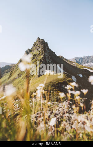 Summer mountains Landscape flowers and mountains travel background wild nature ambience scenic view - Stock Image