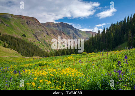 Wildflowers and mountains, American Basin, San Juan National Forest, Colorado USA - Stock Image