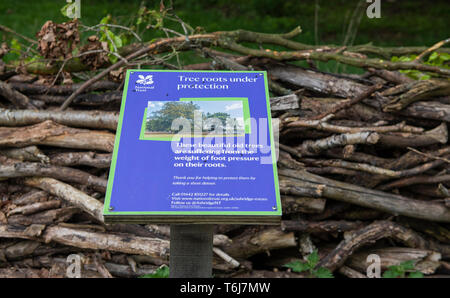 National Trust information sign for the protection of tree roots Ashridge Estate UK - Stock Image