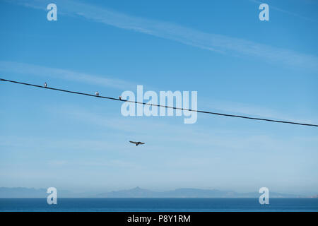 Birds sat on a power line over the Aegean sea with the Sardonic Islands in the background as another bird swoops below, East Attica, Greece, Europe. - Stock Image