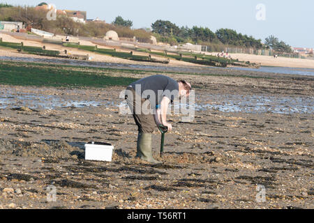 Fisherman digging for bait on the sandy beach at Hill Head near Fareham, UK - Stock Image