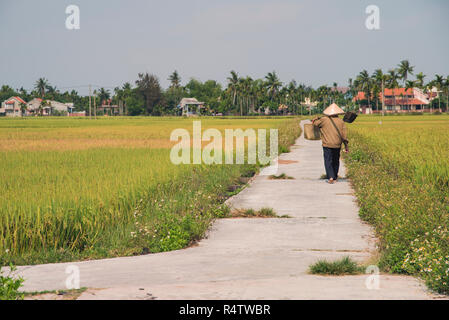 Hoi An, local Vietnamese walking along a rice field carrying a rice crop just outside the old town of Hoi An Vietnam. - Stock Image