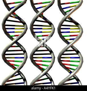 Deoxyribonucleic acid (DNA) double helix - Stock Image