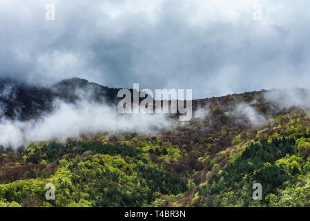 Spring in misty mountain - Stock Image