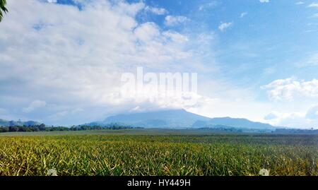Scenic View Of Field Against Sky - Stock Image