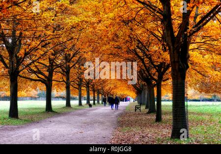 Autumn leaves on an avenue of trees in Wollaton Park,Nottingham,England,UK - Stock Image