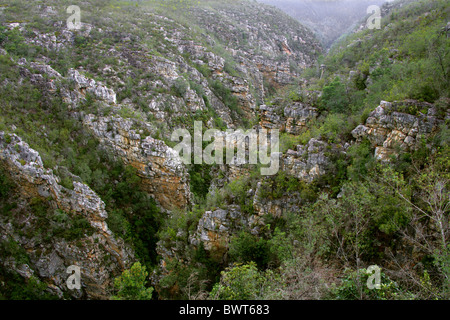 Bloukrans River Gorge from the Bloukrans Bridge, Tsitsikamma, South Africa - Stock Image