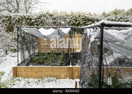 raised beds of vegetables under protective netting in winter - Scotland, UK - Stock Image
