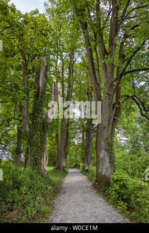 Avenue in spring at Murnau, Bavaria, Germany - Stock Image