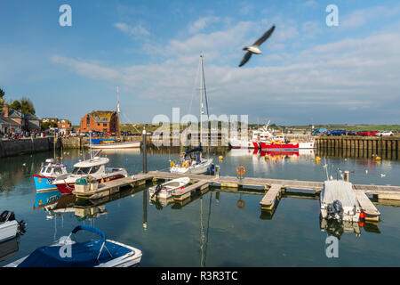 A seagul flies over boats at anchor in the picturesque harbour at Padstow, Cornwall, England - Stock Image