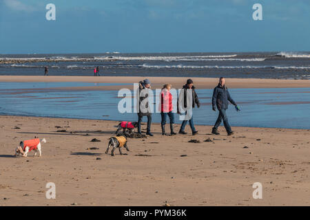 People walking their Spaniel dogs on Alnmouth beach, Northumberland Coast AONB, UK on a bracing winter day with a brisk wind and bright sunshine - Stock Image