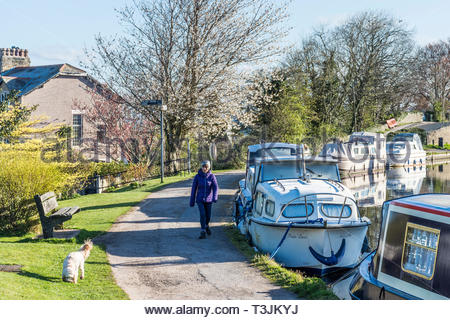 Hest Bank, Lancashire, UK, 10 April 2019. UK Weather: Clear blue sky and bright sunshine after an overnight frost as a dog walker makes her way along the towpath by the Lancaster Canal. Further sunshine is forecast for the rest of the day, but with an Easterly breeze it will feel cool out of the sunshine. Credit Keith Douglas News/Alamy Live News - Stock Image