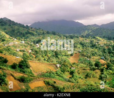 Farmland in the valley. Kingstown, St. Vincent. West Indies. - Stock Image