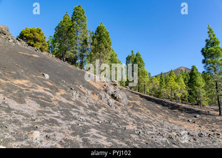 Soil made up of volcanic lava with Pico Birigoyo in the distance past the pine trees, La Palma Island, Canaries - Stock Image