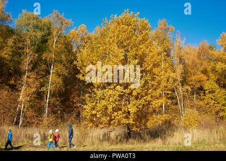 People walking among trees with golden yellow foliage in autumn. Bitsevski Park (Bitsa Park), Moscow, Russia. - Stock Image