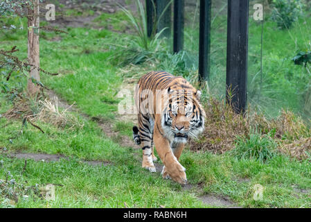 London, United Kingdom. 3rd Jan, 2019. Zookeepers at ZSL London Zoo count the animals at the Zoo's annual stocktake. Credit: Peter Manning/Alamy Live News - Stock Image