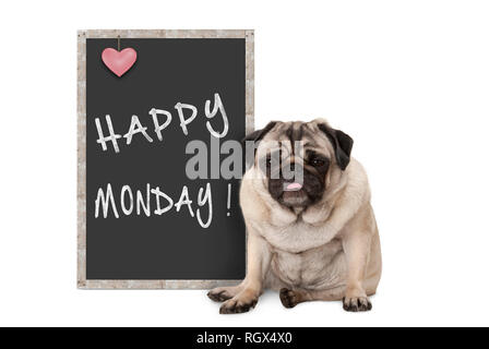 cute grumpy pug puppy dog with bad monday morning mood, sitting next to blackboard sign with text happy monday - Stock Image