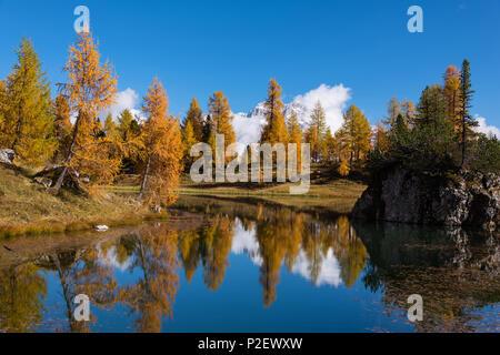 Mountain Lake, Reflection, Autumn, Autumn Foliage, Lago Federa, Dolomites, Italy - Stock Image