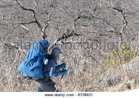 Hiker uses walking sticks to support himself and his pack while walking in the Shenandoah National Park. - Stock Image