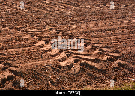 tire tracks of a tractor, deep wheel tracks in dried soil from a field after harvest - Stock Image