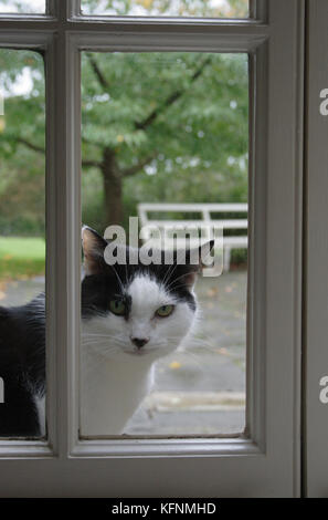 cat sitting at window to come in - Stock Image