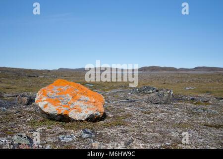 Orange lichen rock - Stock Image