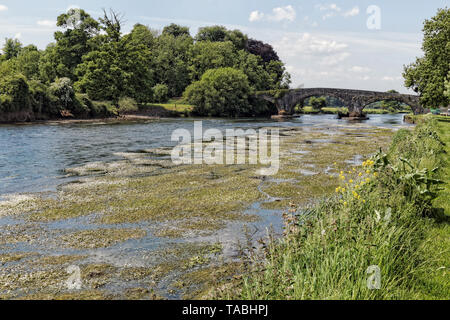 Image of  the Suir River in summer overgrown with vegetation.Ireland. - Stock Image