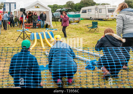 Ferret racing at Holkham Country Fair, North Norfolk. - Stock Image