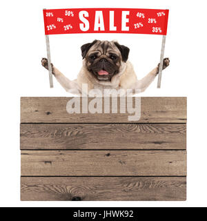happy cute pug puppy dog holding up red banner sign with text sale % off, with wooden board isolated on white background - Stock Image