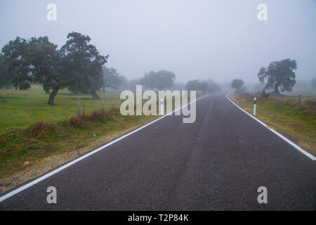 Road in the mist. Los Pedroches valley, Cordoba province, Andalucia, Spain. - Stock Image