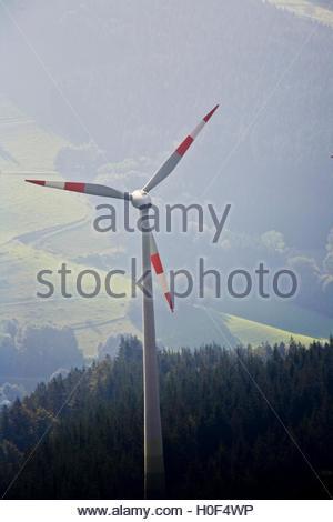BLWX108373 [ (c) blickwinkel/McPHOTOx/PhotoPoster Tel. +49 (0)2302-2793220, E-mail: info@blickwinkel.de, Internet: - Stock Image