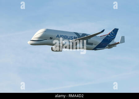 Broughton, Flintshire, UK. 14th February 2019. The new Airbus A330-743L transport plane known as the Airbus Beluga XL does a fly past at Hawarden Airport. The airport is adjacent to the Airbus factory on the outskirts of Chester and this is the first visit of the plane to the factory where it will remain until Saturday. The Beluga XL is designed to transport aircraft wings and has 30% more cargo capacity than the current Beluga. Credit: Andrew Paterson/Alamy Live News - Stock Image