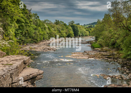 The river Ure, looking downstream from Lower Falls, Aysgarth, Wensleydale, Yorkshire Dales National Park, UK - Stock Image