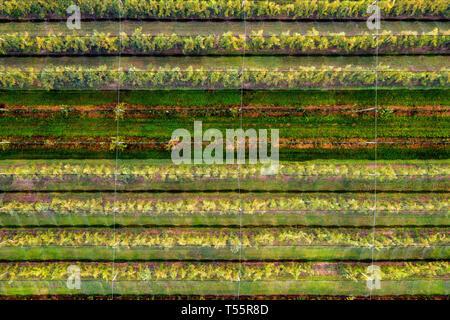 Apple orchard at Margaret River, Western Australia - Stock Image