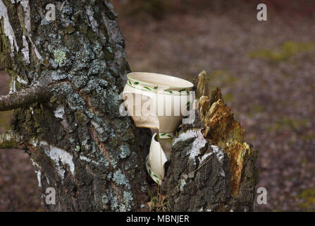 broken ceramic plant pot in crotch - Stock Image