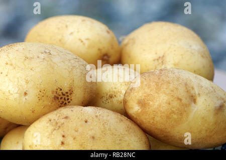 Closeup of several new white potatoes - Stock Image