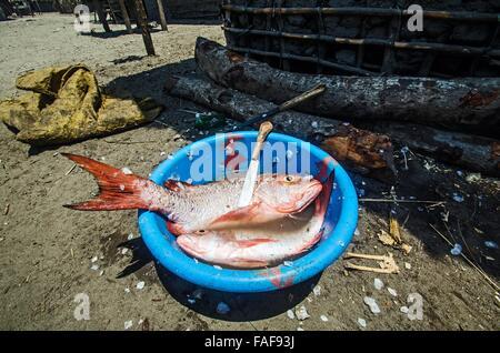 The day's catch, Yele island, Sierra Leone - Stock Image