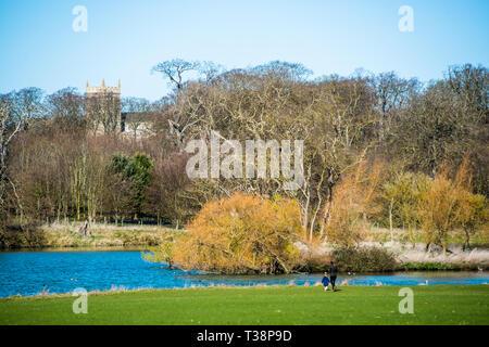Holkham park lake, Holkham hall in North Norfolk, East Anglia, England, UK - Stock Image