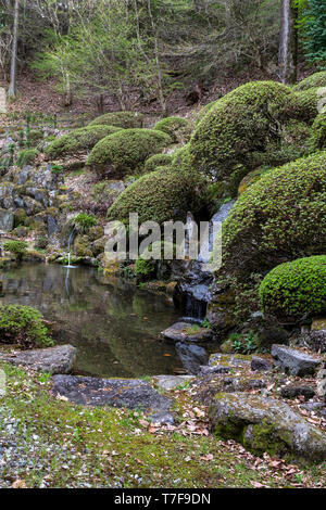 Hokkeji Temple Garden is next door to Kaminomiya at Suwa Taisha Shrine with an impressive pond garden. There are satsuki azaleas planted on the slope  - Stock Image