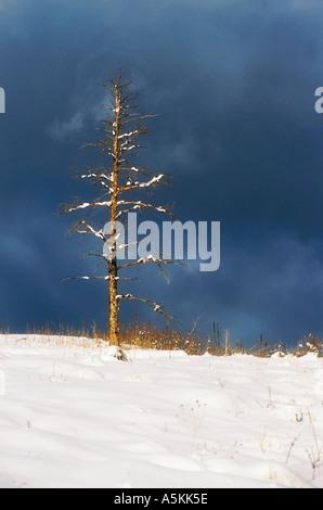 Mount Falcon Park in Colorado 1996 - Stock Image
