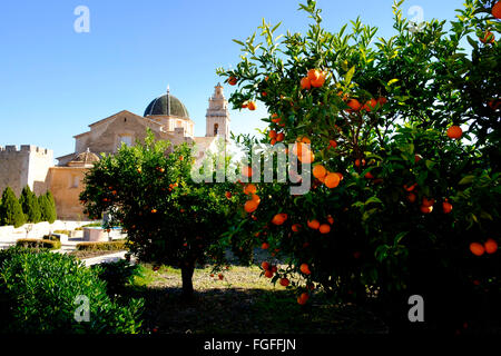 Ripe orange tree and the Cistercian Monastery of Saint Mary of Valldigna in Simat Spain - Stock Image
