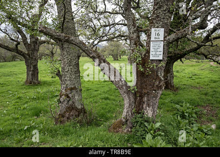 Signs for Beat 16 belonging to the Badenoch Angling Association on a tree near Kingussie, Cairngorm National Park, Scotland, UK. - Stock Image