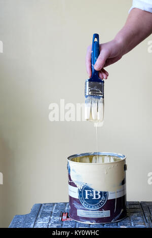 An open tin of domestic wall paint. the decorator has just dipped their bristle brush into the paint and allowing - Stock Image