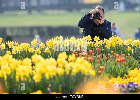 22 March 2019, Baden-Wuerttemberg, Ludwigsburg: A man takes photos of daffodils and tulips on the first day of the 65th garden season in blooming Baroque. Photo: Sebastian Gollnow/dpa - Stock Image