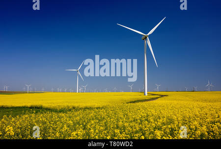 Wind turbines on fields with windmills in the Romanian region Dobrogea. Rapeseed field in bloom. Renewable energy. Protect the environment. - Stock Image